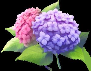 あじさいの花2