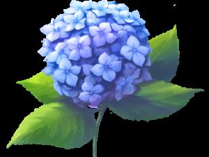 あじさいの花3